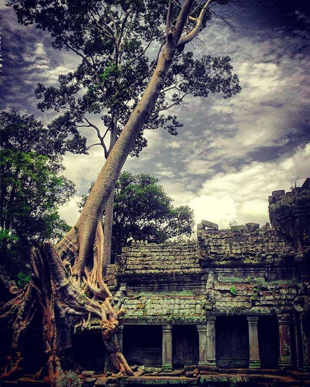 Nature is taking over AngkorWat again Trees are growing outhellip