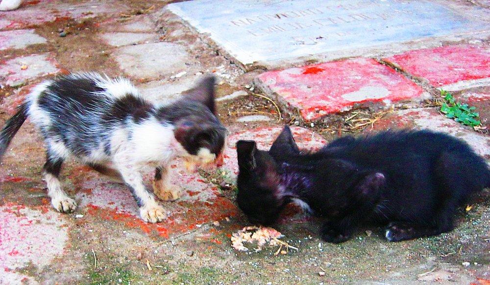 Mompos Kittens