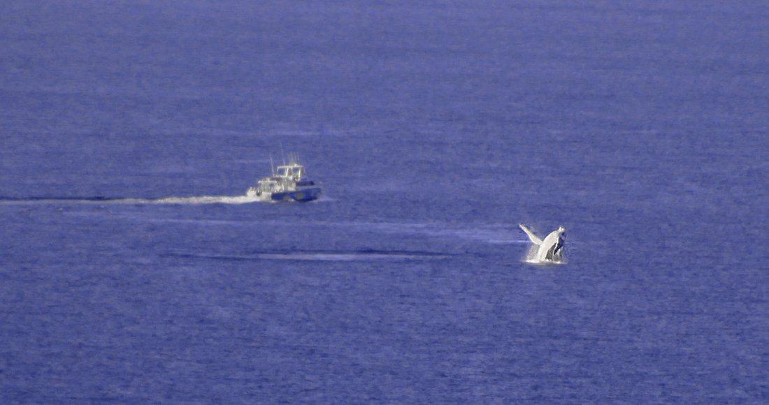 Whale watching, Lighthouse Exmouth Wale Westküste Australien