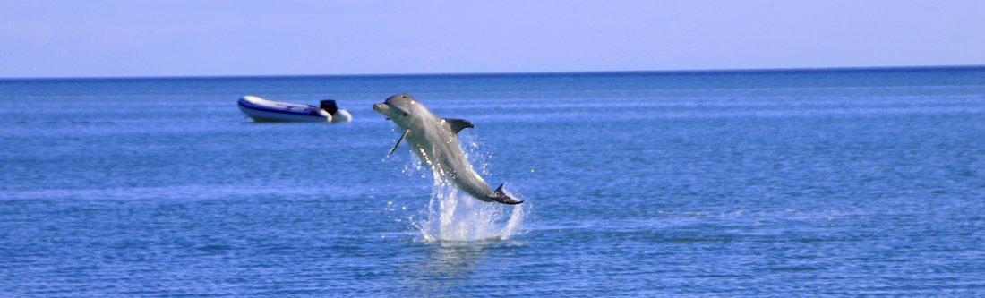 Jumping Dolphin, Monkey Mia