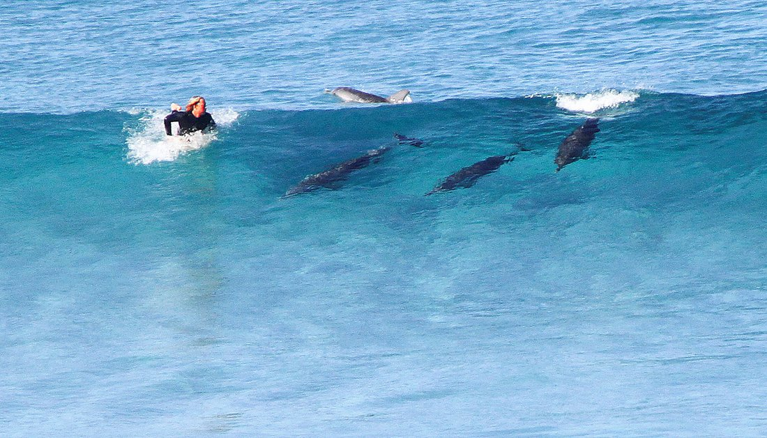 Esperance, Surfing with Dolphins