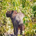 capybara trending in 2016? Thats so Bolivia 2011!  travelgramhellip