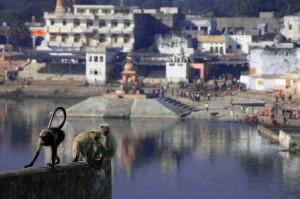 Pushkar, Holy Lake, Monkeys