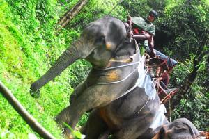 Kao Sok Elefanten