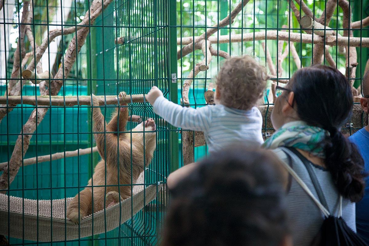 Sloth Sanctuary Puerto Viejo